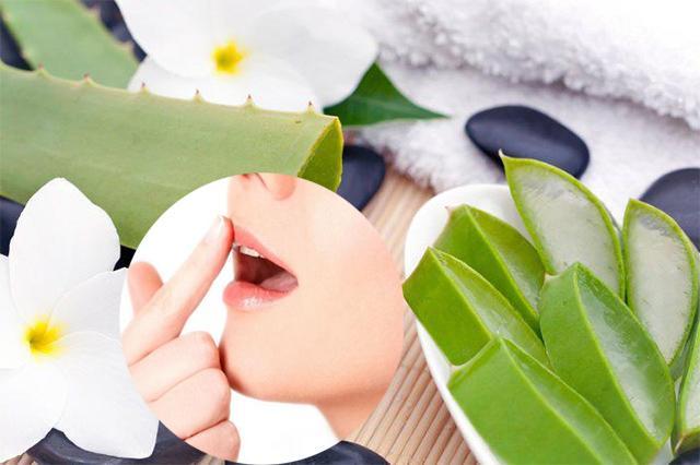 Chỉ cần dùng nha đam tươi bạn có thể dưỡng môi trở nên mềm mại hồng hào