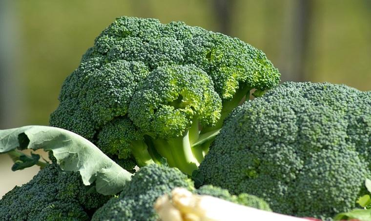 Lợi ích của bông cải xanh đối với cơ thể
