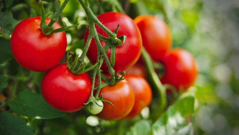 Cà chua là thực phẩm đẹp da giá rẻ dễ mua