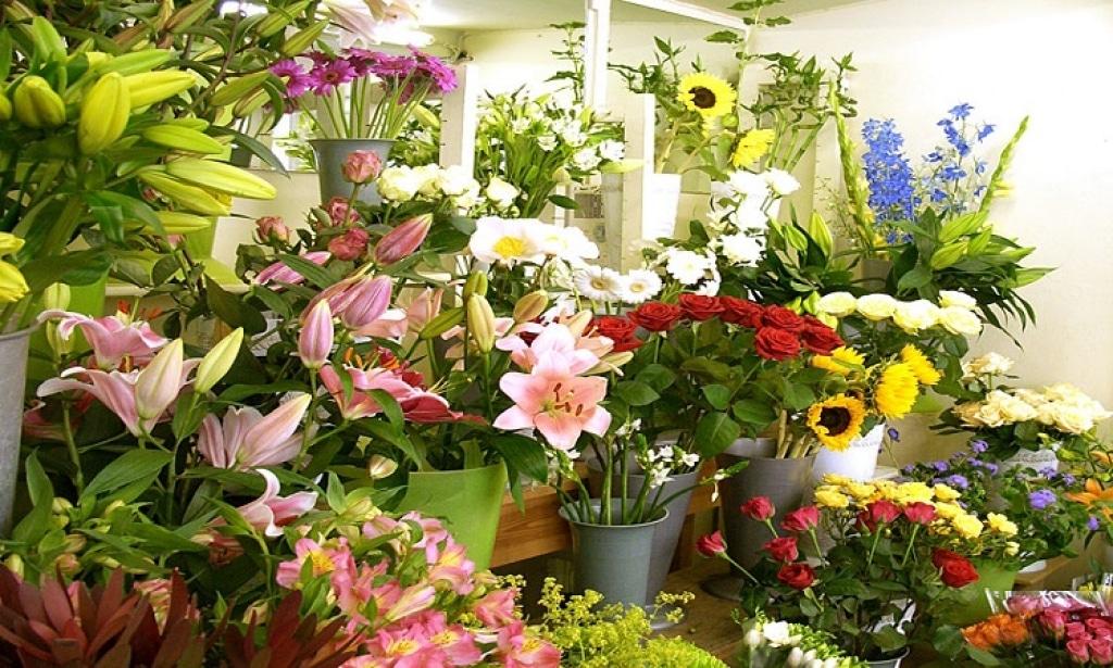 Hoa tươi là đồ trang trí không thể thiếu mỗi khi Tết đến, Xuân về