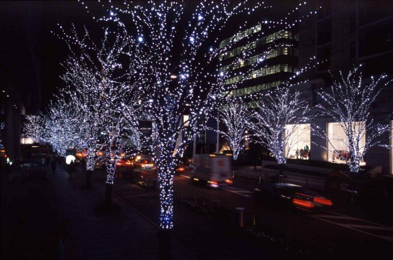 Đèn nháy trang trí lên cây cảnh tôn thêm vẻ đẹp cho ngôi nhà của bạn