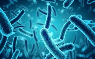 Sử dụng probiotic để chữa bệnh âm đạo như thế nào?
